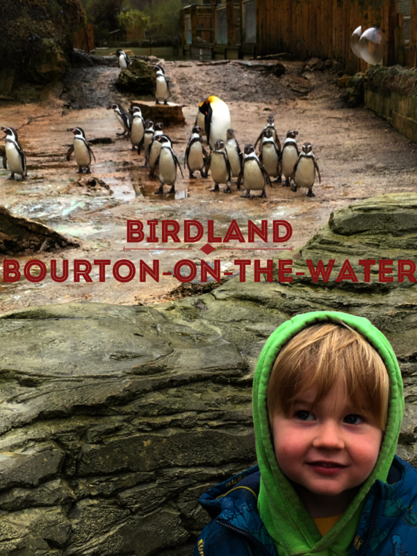 Ted at Bob at Birdland and Jurassic Journey