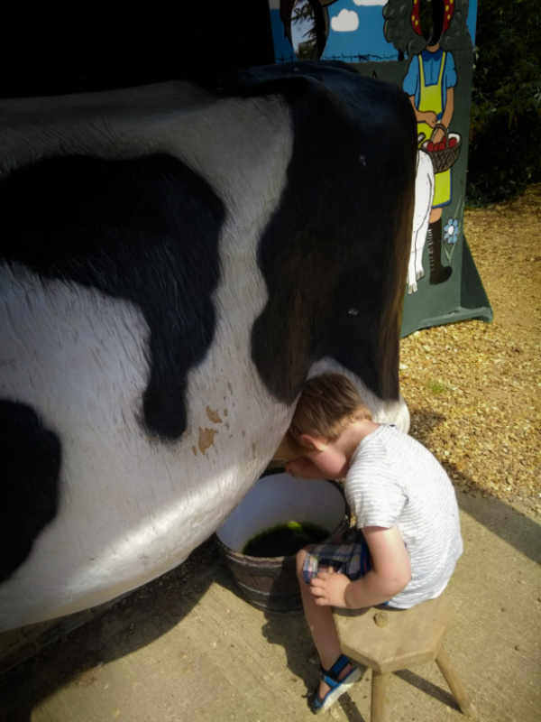 Ted Milking a Cow at the Fenland Farming Museum