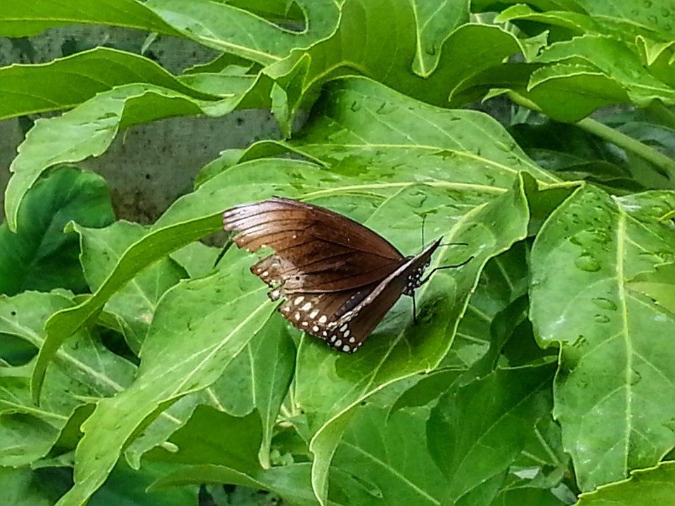 Jimmys Farm - Butterfly House