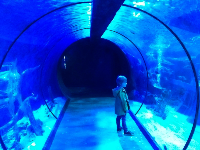 Visiting Sharkbait Reef SEAlife Centre in Alton Towers