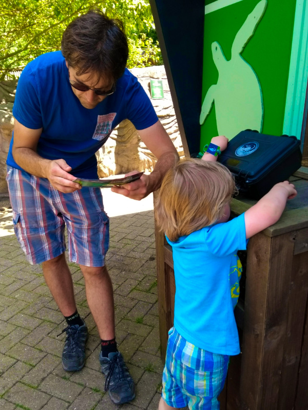 Gulliver's Dinosaur and Farm Park Wrist Band Challenge