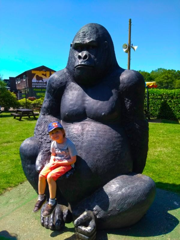 Gorilla Fun at Paradise