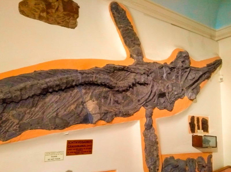 Whitby - Ichthyosaur in Whitby Museum