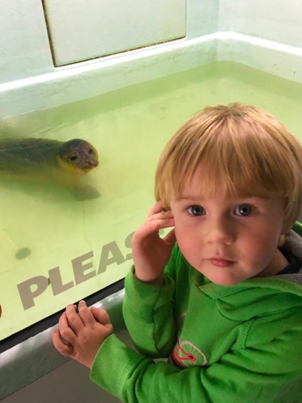 SEA LIFE Hunstanton - Seal Rescue