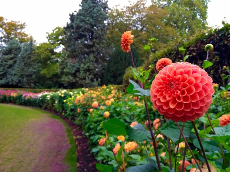 Anglesey Abbey's Dahlia Garden
